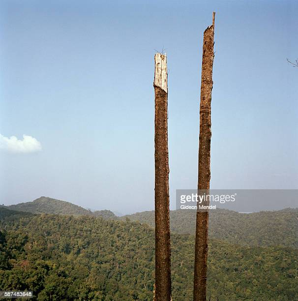 A view of the deforestation caused by slash and burn agriculture in theNam Ha National Protected Area The photograph was taken on the trail between...