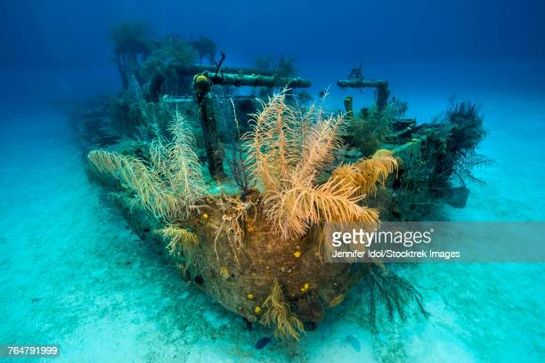 A view of the Doc Polson shipwreck in Grand Cayman, Cayman Islands.