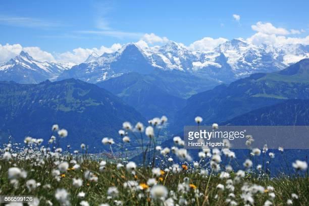 View of the Eiger, Mönch and Jungfrau peaks from Niederhorn, Swiss Alps Jungfrau-Aletsch, UNESCO World Heritage Site, Switzerland