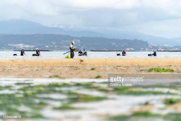 View of the estuary of Arousa with the shellfishermen picking up clams on May 12 2020 in A Pobra do Caramiñal Spain The shellfishermen of A Pobra do...