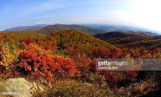 A view of the fall colors October 24 2015 along Skyline drive in Shenandoah National Park in Virginia Thousands of visitors descended on the park...