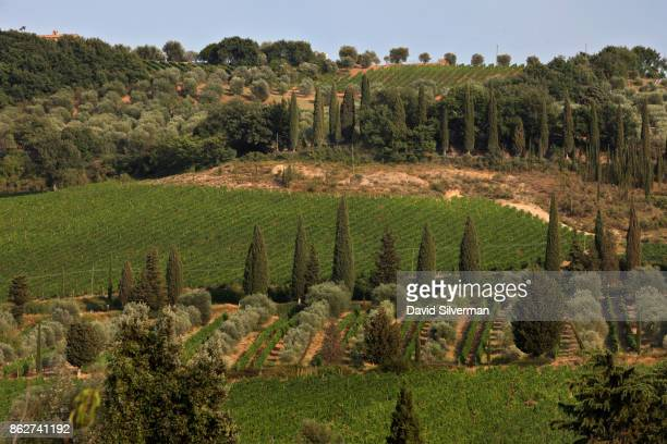 A view of the fields and vineyards surrounding the Abbey of Sant'Antimo on July 23 2015 in the valley below the hilltop town of Montalcino in the...