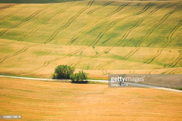 View of the fields on the rolling hills in Val d'orcia