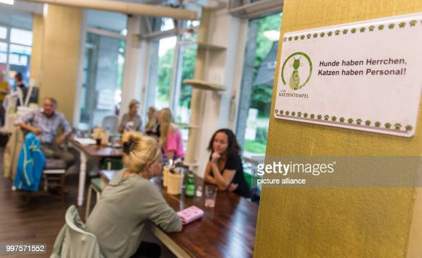 A view of the first ever Cat Café of Hamburg Germany 27 July 2017 After Nuremberg and Munich the city of Hamburg may now also cuddle cats to their...