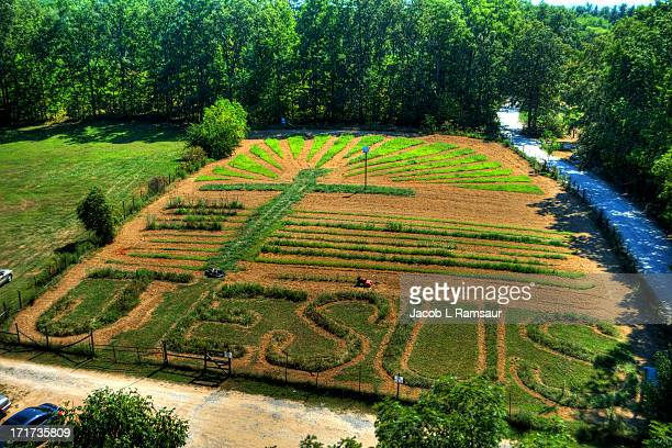 CONTENT] View of the garden from the very top of the Minister's Tree House in Crossville TN Three bracketed photos were taken and combined to create...