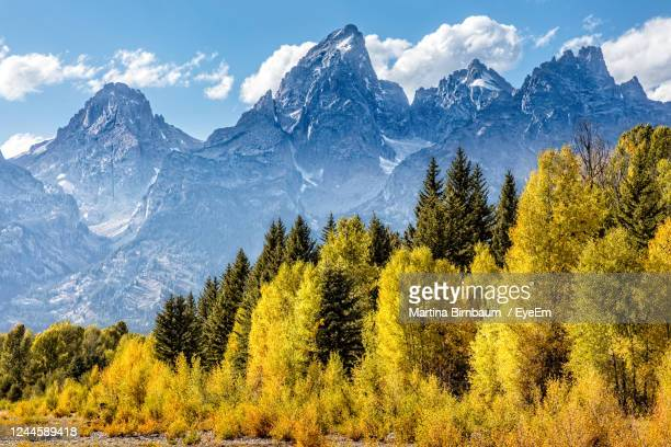 view of the grand teton mountains from schwabacher landing on the snake river. grand teton - beaver creek colorado stock pictures, royalty-free photos & images