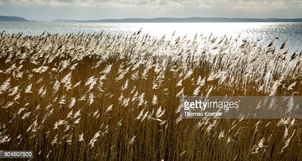 View of the Großer Jasmunder Bodden near Glowe on the island of Ruegen on February 05 2018 in Glowe Germany