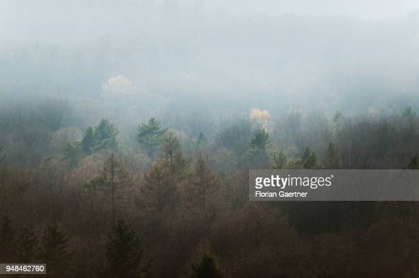 View of the Grunewald in fog on April 08 2018 in Berlin Germany