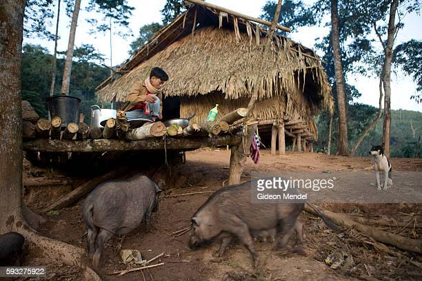 A view of the guest lodge built to house trekkers just outside the Ban Nam Lai Akha village Some of these pigs were slaughtered to feed the tourists...