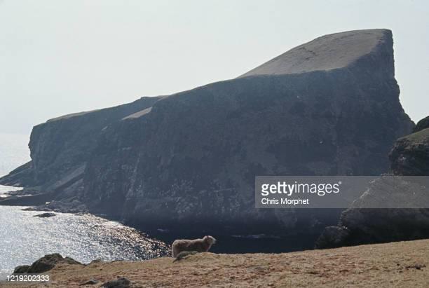 View of the headland of Sheep Rock, Fair Isle, Shetland Islands, Scotland, June 1970.