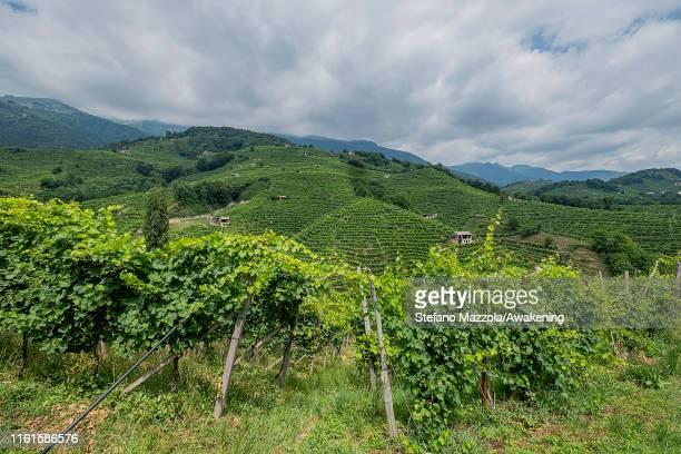 A view of the hills of the Prosecco of Conegliano and Valdobbiadene on July 12 2019 in Conegliano Italy The Conegliano and Valdobbiadene regions of...