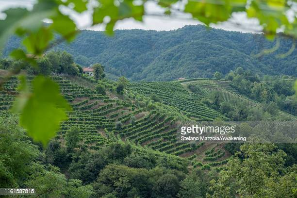 A view of the hills of the Prosecco of Conegliano and Valdobbiadene on July 12 2019 in Conegliano ItalyThe Conegliano and Valdobbiadene regions of...