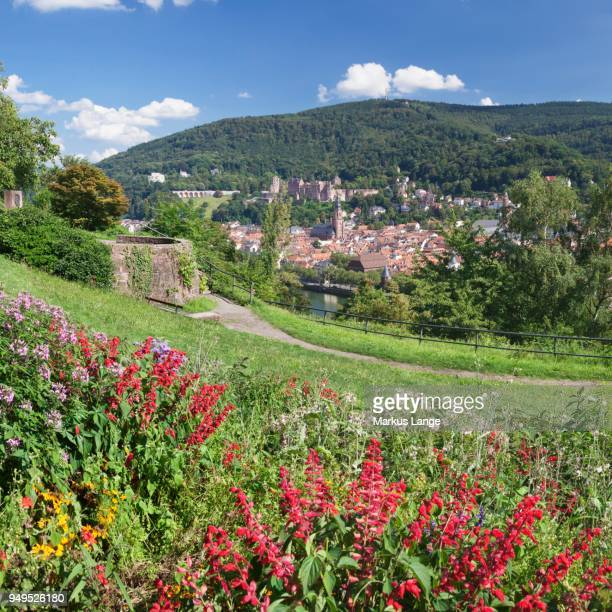 view of the historic centre and castle from the philosophers walk in heidelberg, baden-wuerttemberg, germany - heidelberg germany stock pictures, royalty-free photos & images