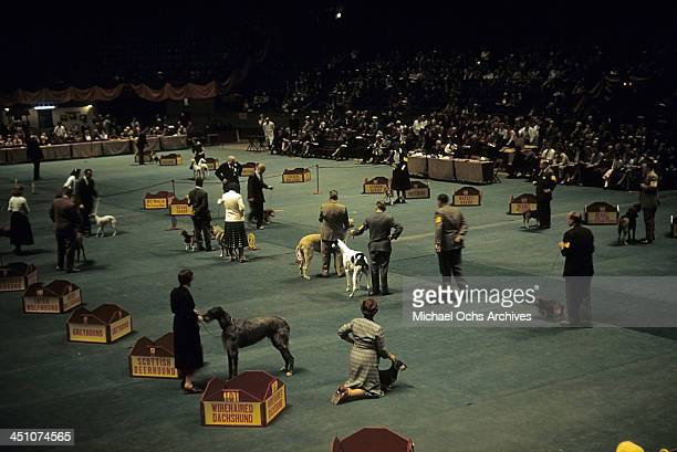 A view of the Hound Group during the Westminster Kennel Club Dog Show at Madison Square Garden in New York New York