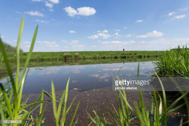 View of the Hunte an inflow of the Duemmer lake near Lemfoerde Germany 22 May 2017 The second biggest inland lake of the state is prone to blue algae...