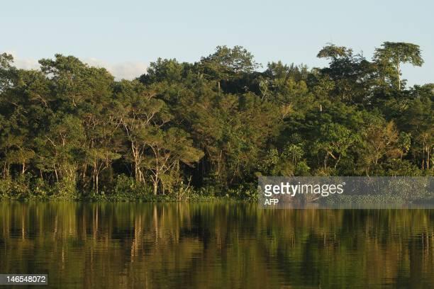 View of the jungle at the Limoncoha lake next to the Yasuni Ecuadorean National Park in the Orellana ProvinceEcuador on June 16 2012 The Yasuni...