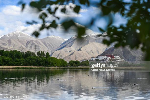 A view of the Lalu wetland on May 28 2020 in Lhasa Tibet Autonomous Region of China Lalu wetland national nature reserve with an altitude of about...