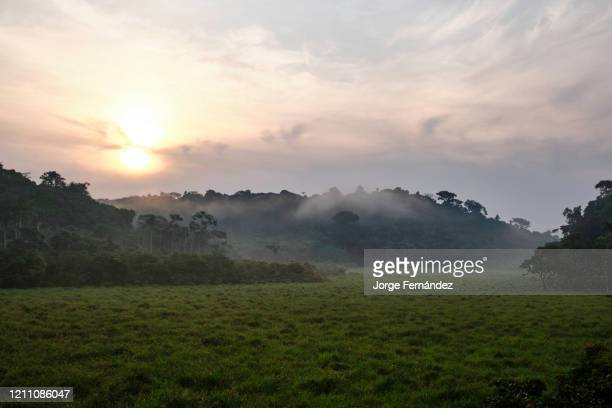 View of the Langoue Bais from a platform made for observation purposes. A bais is an natural forest clearing frequented by animals for foraging and...