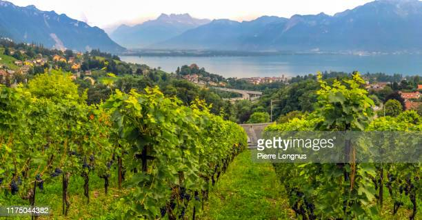 view of the lavaux vineyard, lake geneva and the alps - montreux stock pictures, royalty-free photos & images