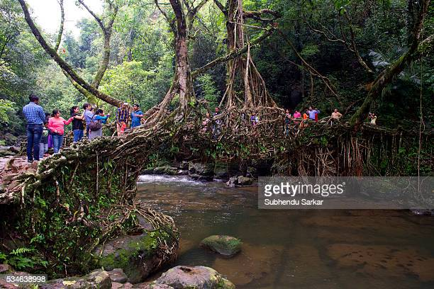 A view of the living root bridge at Mawlynnong on the outskirts of Shillong Mawlynnong is a village in the East Khasi Hills district of Meghalaya It...