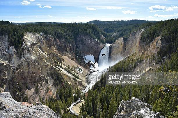 A view of the Lower Falls at the Grand Canyon of the Yellowstone National Park on May 11 2016 Yellowstone the first National Park in the US and...