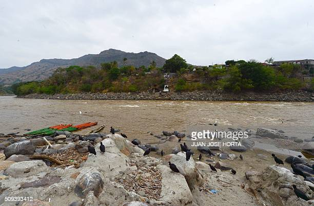 View of the Magdalena River in Honda Tolima department Colombia on February 9 2016 Affected by El Nino the Magdalena Colombia's main river is in its...