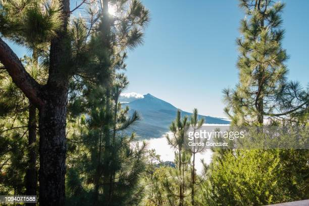 view of the majestic volcano of teide - el teide national park stock pictures, royalty-free photos & images