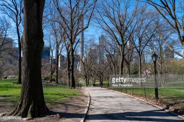 a view of the manhattan skyline from central park deserted because of coronavirus outbreak. - alex potemkin coronavirus stock pictures, royalty-free photos & images