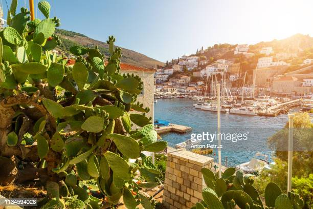 view of the marina of hydra island, greece - hydra greece photos stock pictures, royalty-free photos & images