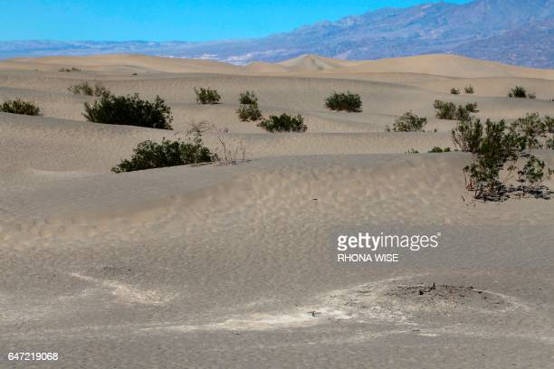 A view of the Mesquite Flat Sand Dunes in Death Valley National Park in Death Valley California on February 14 2017 / AFP PHOTO / RHONA WISE