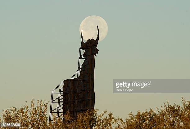 A view of the moon a day after the Super moon setting behind the Spanish roadside bull advertising Osborne cherry wine on November 15 2016 in...