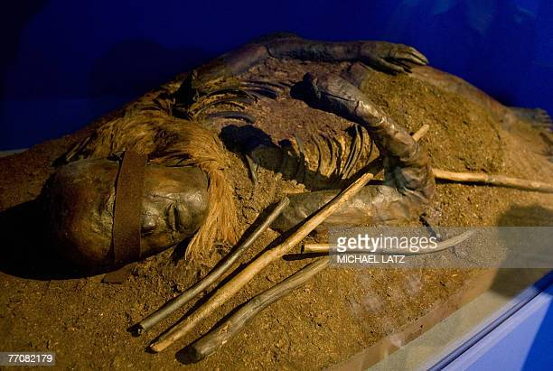 View of the mummified remain of 'The Woman from Windeby' at the 'Mummies The Dream of Everlasting Life' exhibition at the ReissEngelhorn Museum in...