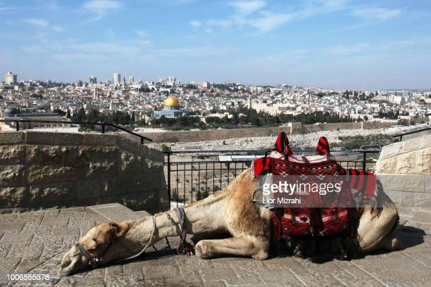 view of the old city of jerusalem and the dome of the rock  from mount of olives - mount of olives stock photos and pictures