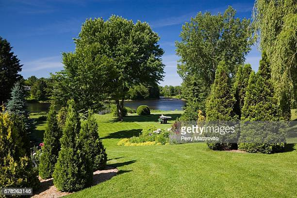 view of the ouareau river in garden with lawns and cedar trees (thuja occidentalis) in spring season, quebec, canada - coniferous tree stock pictures, royalty-free photos & images