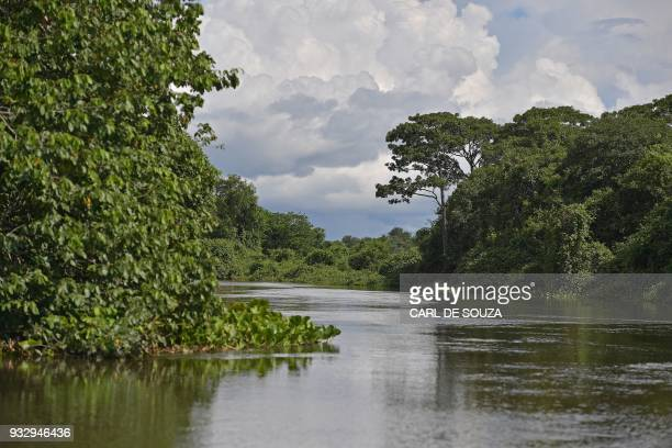 View of the Pantanal wetlands in Mato Grosso state Brazil on March 6 2018 The Pantanal is the largest wetland on the planet located in Brazil Bolivia...