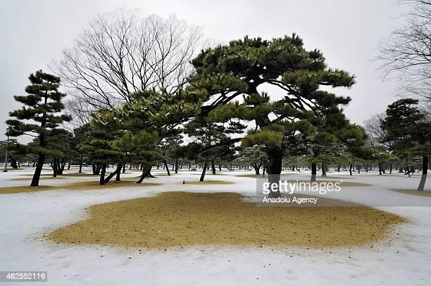 A view of the park of the Meiji Jingu shrine covered with snow in Tokyo Japan on January 30 2015 While rail traffic is disrupted some Japanese take...