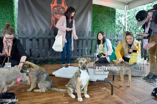 View of the puppy pen at Amazon Prime Video's 'Good Omens Garden of Earthly Delights' activation at the SXSW trade show during the 2019 SXSW...