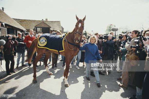 View of the race horse Mr Frisk being led out to meet the press at trainer Kim Bailey's yard at Andoversford near Cheltenham Gloucestershire on 8th...