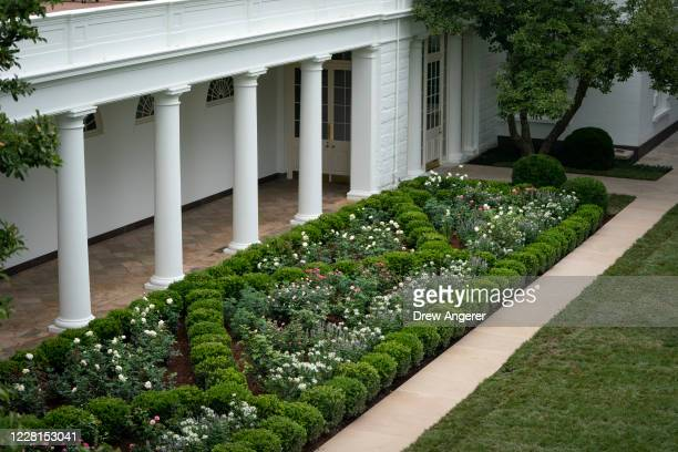 View of the recently renovated Rose Garden at the White House on August 22, 2020 in Washington, DC. The Rose Garden has been under renovation since...