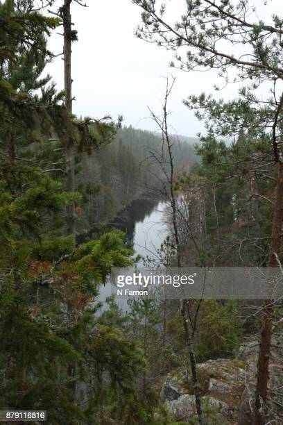 View of the river through the trees in Finland