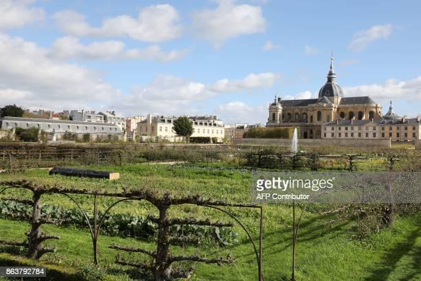 60 Top Garden Of Versailles Pictures, Photos, & Images