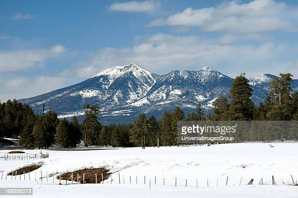 View of the San Francisco Peaks covered in snow with Ponderosa Pine trees in the foreground from just south of Flagstaff Arizona
