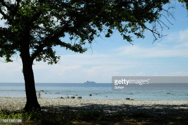 view of the sea in visby at a tree and two boats at sea in summer - gotland bildbanksfoton och bilder