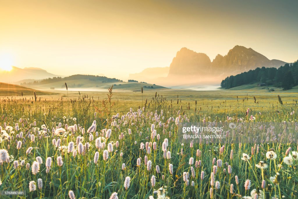 View of the Seiser Alm (Alpe di Siusi in Italian), one of the biggest alpine meadows on the Dolomites, with the Sassolungo and Sassopiatto peaks on the background. : Stock Photo