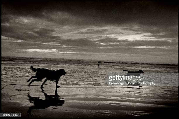 View of the silhouettes of two dogs, Nebo and Junkie, running on the sand at Ocean Shores Beach, Washington, 1991.
