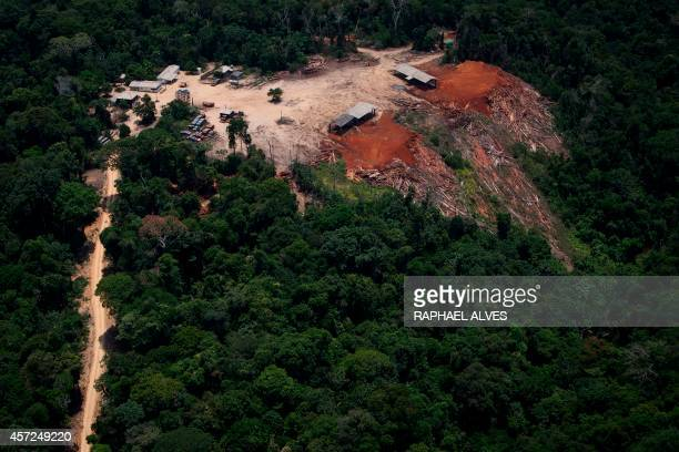 View of the so called Odami sawmill during an overflight by Greenpeace activists over areas of illegal exploitation of timber as part of the second...
