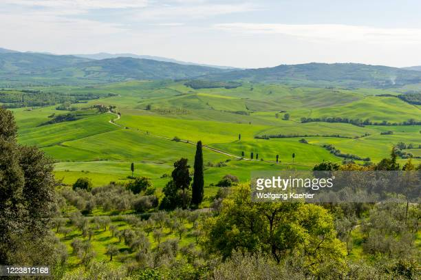 View of the Val d'Orcia near Pienza in Tuscany, Italy with Italian cypress trees and gravel road going to a farm house.