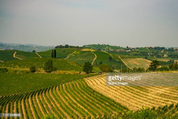A view of the Vineyard hills at the Castelnuovo Calcea in Asti