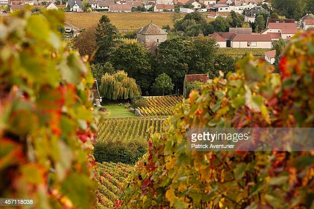 A view of the vineyards of GevreyChambertin on October 10 2014 in GevreyChambertin France In the village of GevreyChambertin in Burgundy the...