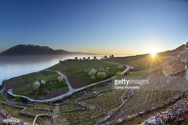 View of the vineyards of Lavaux, the lake leman and the mountains in Switzerland.